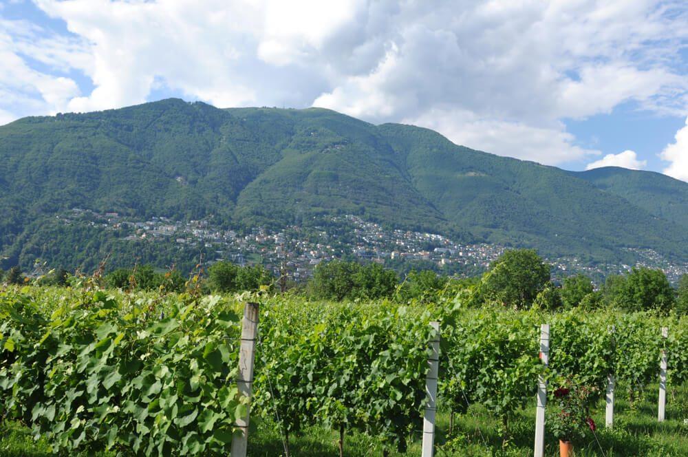 Die Region Ascona-Locarno ist ein ideales Weinanbau-Gebiet. (Bild: GMC Photopress - shutterstock.com)