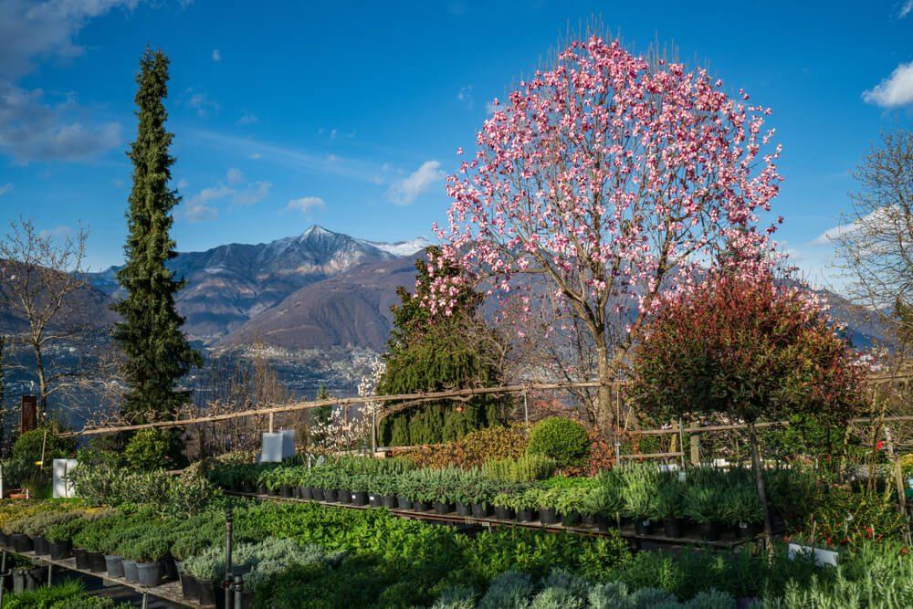 Der Botanische Park von Gambarogno läft zu Erkundungen ein. (Bild: Ksenia Molina - shutterstock.com)