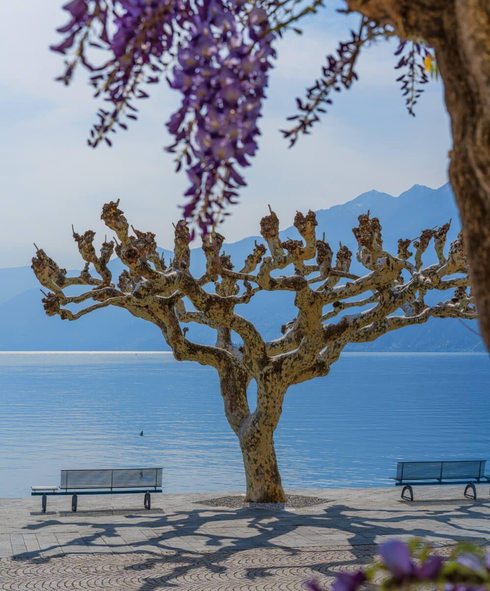 Der Frühling erwacht in Ascona-Locarno. (Bild: Ksenia Molina - shutterstock.com)
